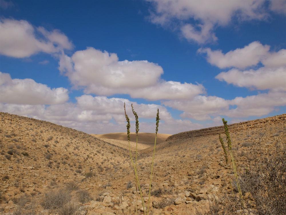 חצבים במדבר