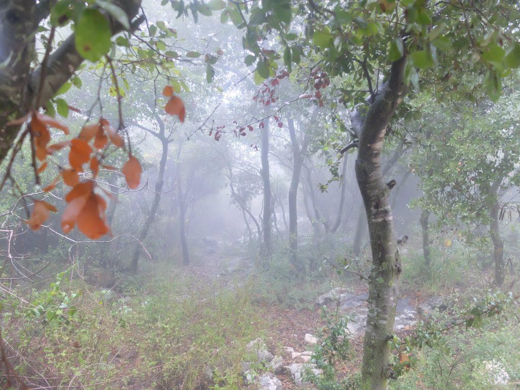 מבעד לערפל, צילום: עינת לומברוזו